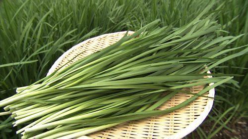 ニラ/韮の栄養や効果効能と食べ方【冷え性・虚弱体質に おすすめ野菜】