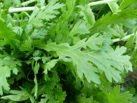 春菊の栄養は風邪予防に効果あり!【野菜の効能と食べ方】