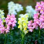 自宅の室内で花を長持ちさせる方法!