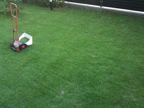 芝張りは初心者でも簡単に出来る!【芝張りの時期や植え方・管理方法】