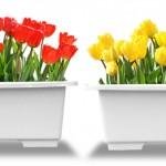 球根の育て方|秋植え春咲き人気の代表花6選!