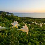 ユリ(百合)の花言葉と品種や育て方【夏に咲くガーデニング草花】