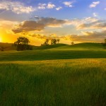 硫酸カリの特徴と使い方【肥料の上手な施し方】