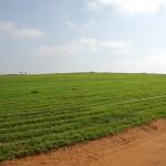 有機100%配合肥料の特徴と使い方【肥料の上手な施し方】