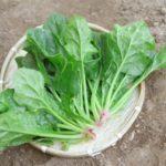 ほうれん草の栄養は老化防止に効果あり!【野菜の効能と食べ方】