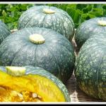 かぼちゃの栄養は若返りに働き美肌をつくる!【野菜の効能と食べ方】