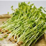 豆苗の栄養は免疫力アップに効果あり!【野菜の効能と食べ方】