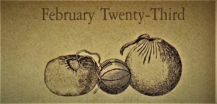 2月23日生まれの運勢と性格【星座/占星術とタロットで導く誕生日占い】