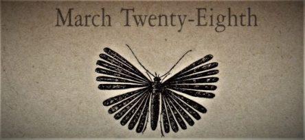 3月28日生まれの運勢と性格【星座/占星術とタロットで導く誕生日占い】