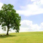庭のシンボルツリーに おすすめの中高木10選!