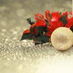 12月1日~12月31日|誕生花と花言葉一覧