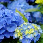 6月1日~6月30日|誕生花と花言葉一覧