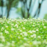 5月1日~5月31日|誕生花と花言葉一覧