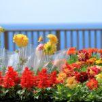 夏から秋に咲く一年草ガーデニング花16選|コンテナや鉢植えにおすすめ!