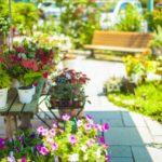 夏から秋に咲く宿根草ガーデニング花13選|コンテナや鉢植えにおすすめ!