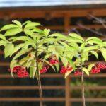 自宅で楽しめる花木(低木)12選